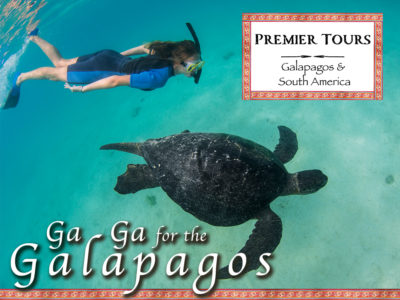Ga Ga Over the Galapagos