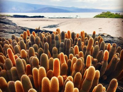 Cactus on Fernandina - Our Favorite Galapagos Visitor Sites Part 2