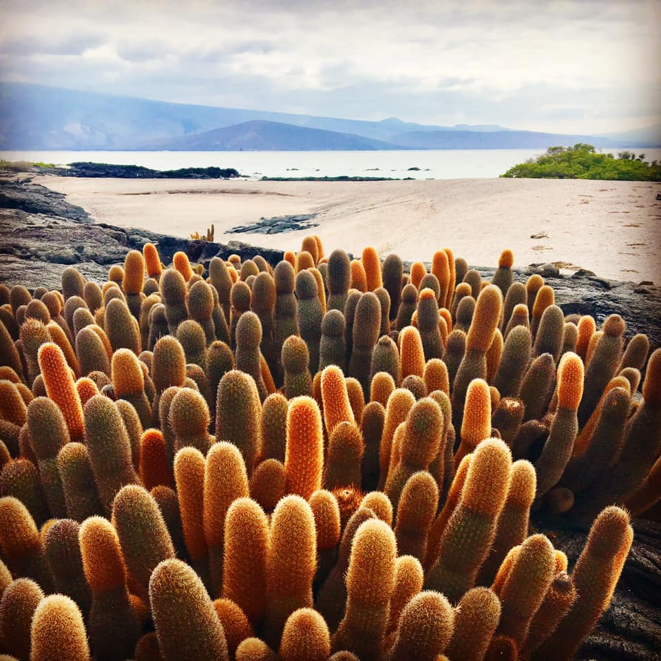 Our Favorite Galapagos Visitor Sites Part 2 - Photo by Allie Almario